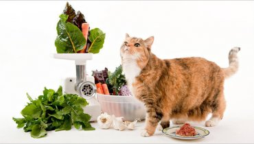How to wean your cat over onto a healthy wholesome diet