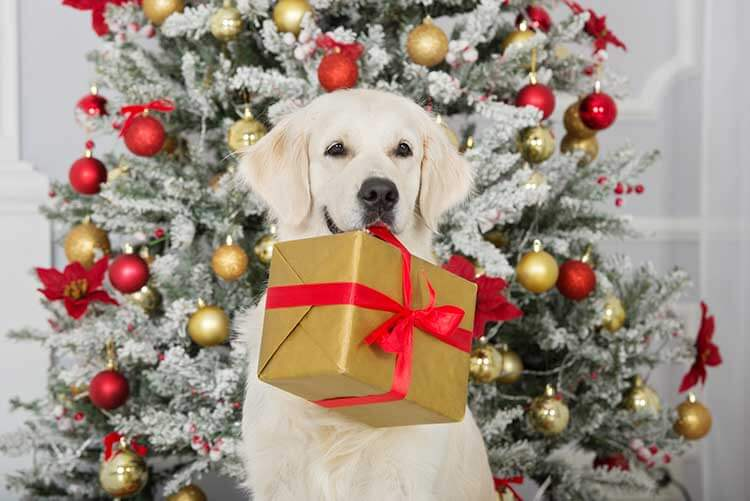 Paul from Vondis Holistic Pet Nutrition offers some advice for Xmas gifts on Smile 90.4 FM Radio