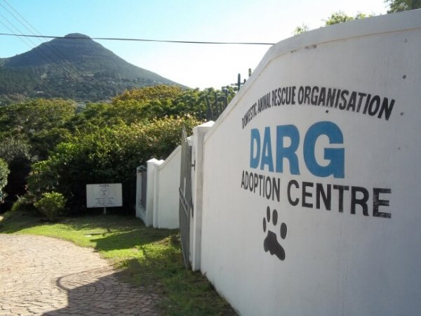 Donate Dog Food To DARG Animal Rescue-208