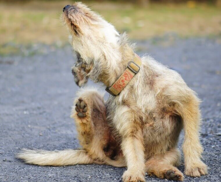 Why is my dog itchy?
