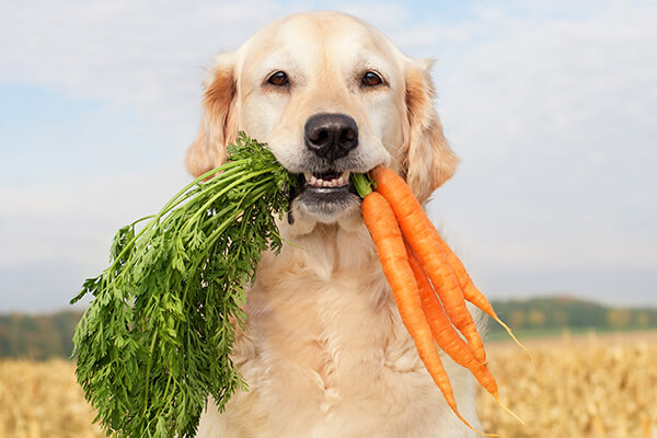 Dogs digest fresh food better and poop less