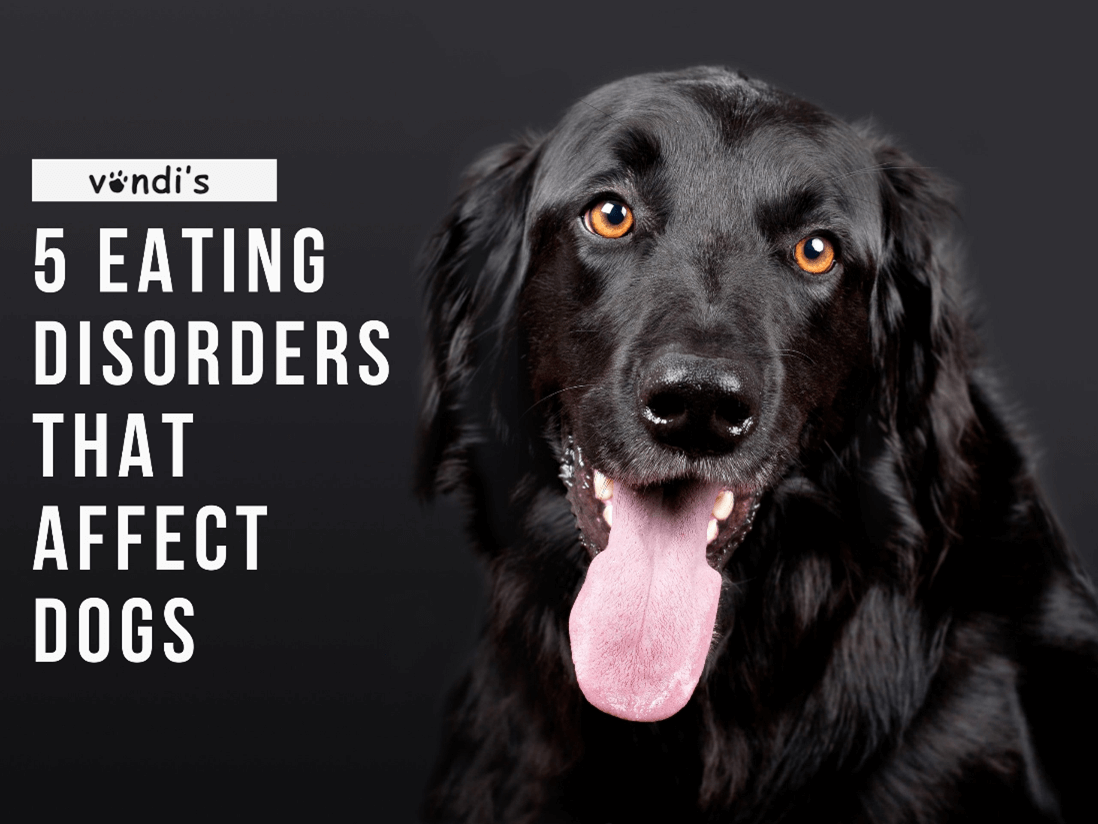 5 common eating disorders that affect dogs