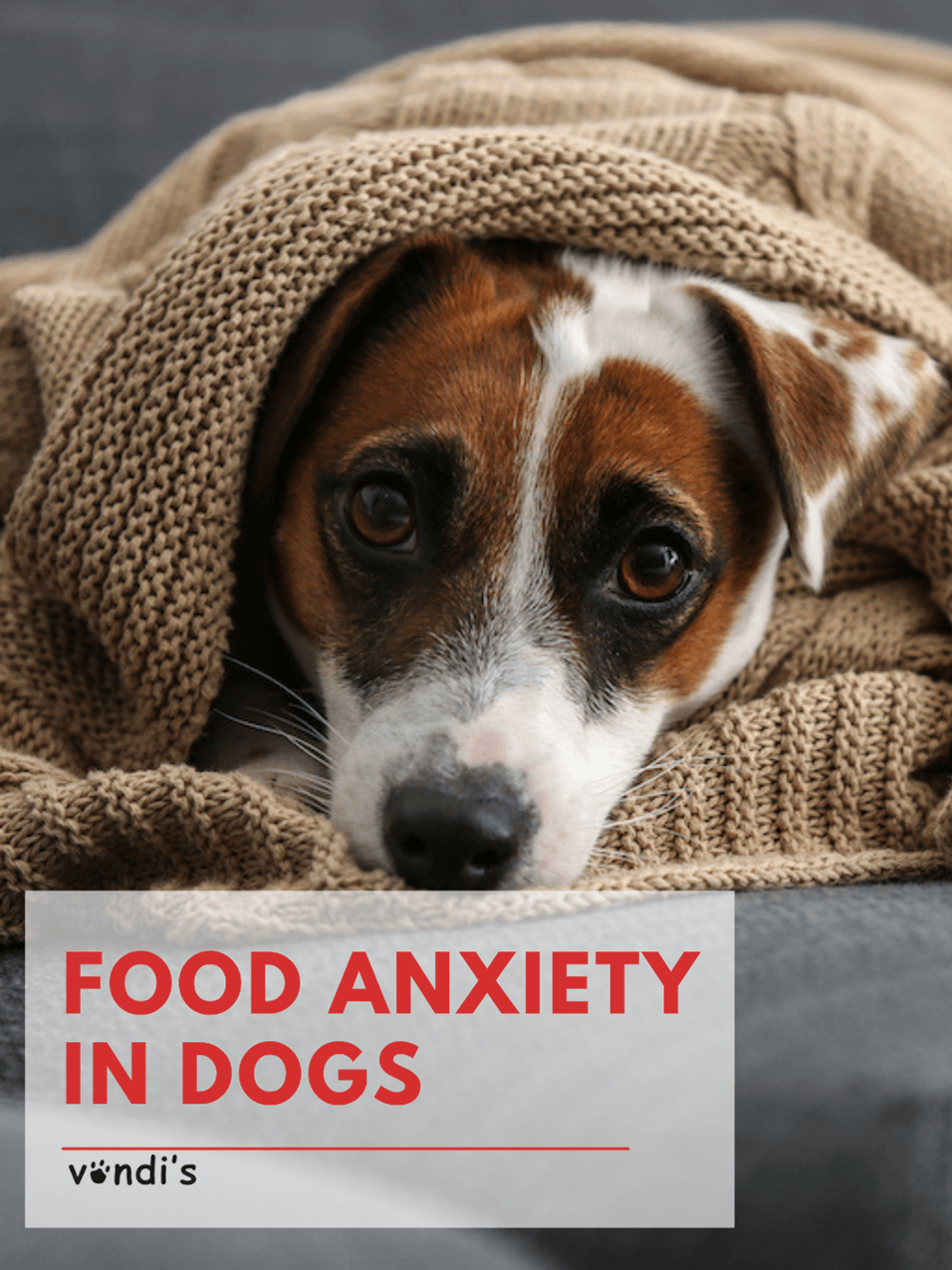 How to Help Your Dog Overcome Food Anxiety