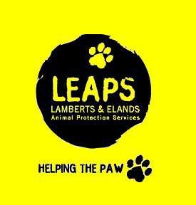 leaps1